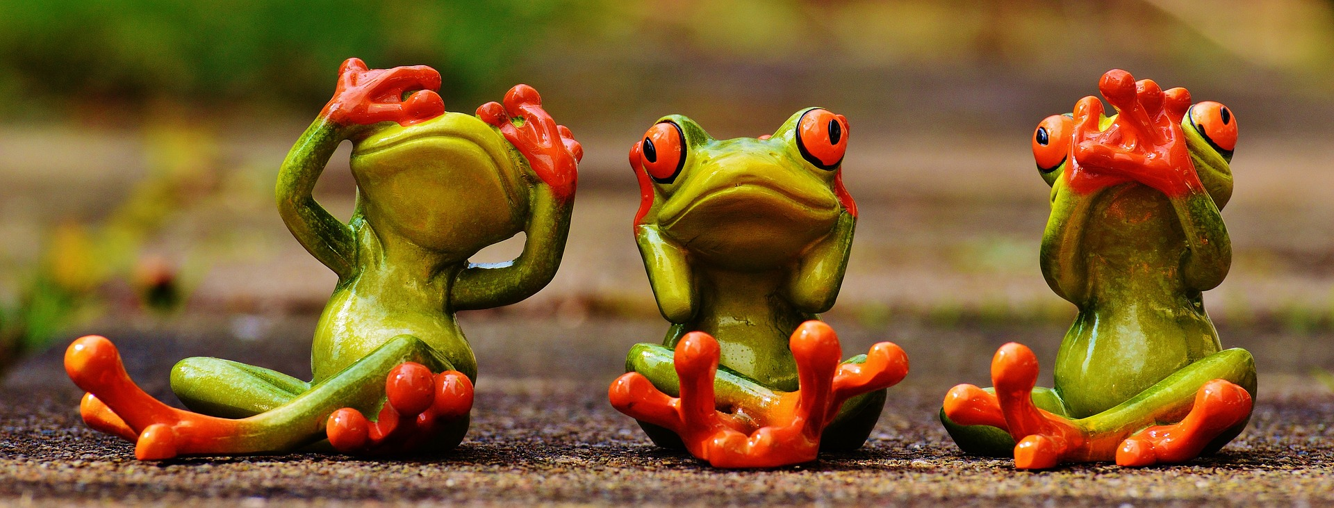 frogs-1274769_1920